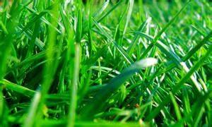 Ab Wann Rasen Vertikutieren : wann d ngen ~ Lizthompson.info Haus und Dekorationen