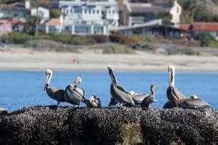 Beach Ecology Coalition Home