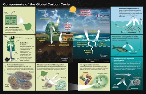 Nutrient Cycling On Glaciers 2 Carbon To The Poles