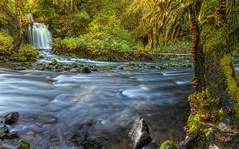 gifford pinchot national forest national park  lewis