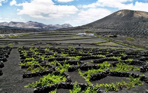 canary island wine holidays raising  glass  lanzarote