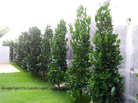 landscape pictures garden design portfolio  malaysia