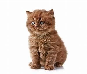 Weißer Wurm Katze : bilder von katzenjunges katze blick tiere wei er hintergrund ~ Markanthonyermac.com Haus und Dekorationen