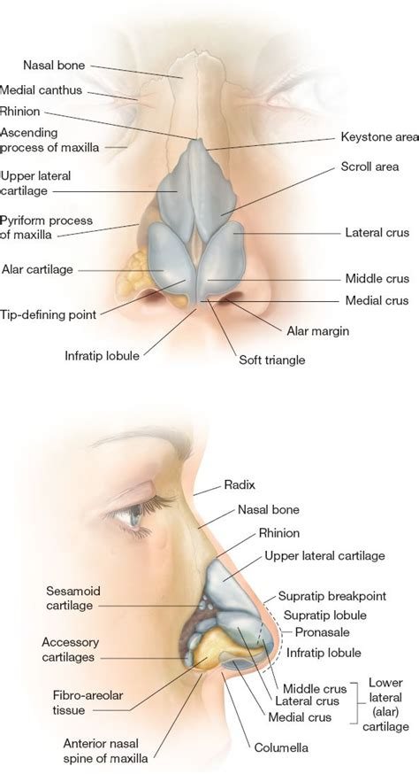 External Nose Structure Diagram