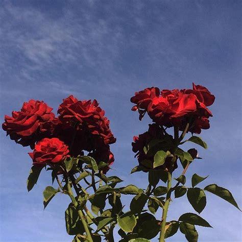 Aesthetic Iphone X Wallpaper Floral by Cosmicislander Bloom Flower Aesthetic