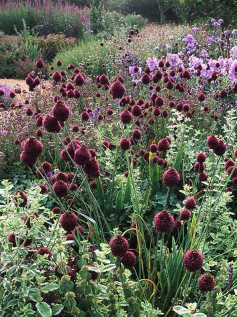 crocus plants for shade buy border phlox phlox paniculata franz schubert delivery by crocus