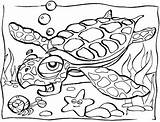 Ocean Coloring Pages Animals Printable sketch template