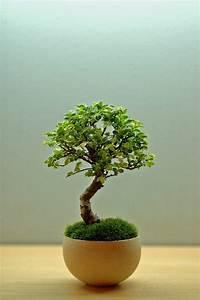 Pflanzen Zu Hause : 52 frische ideen f r zimmerpflanzen ~ Markanthonyermac.com Haus und Dekorationen