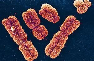 Genetics  Genomics  Genethics