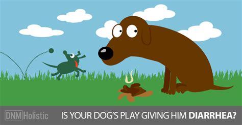 playing   dog   diarrhea dogs naturally
