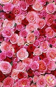 Backgrounds, Wallpapers and Roses on Pinterest