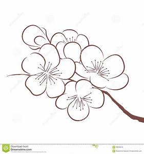 Sakura Flower Draw Top 10 Plum Tree Red Cherry Blossom Drawing Drawings Inspiration