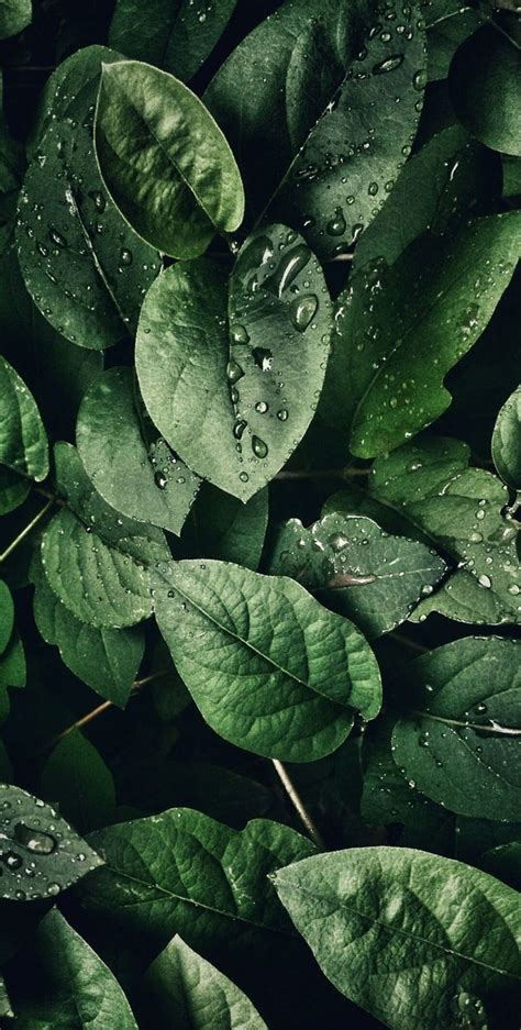 You can also upload and share your favorite aquarium wallpapers. Tropical Leaves, Botanicals, Leaf Phone Wallpaper - Idea Wallpapers , iPhone Wallpapers,Color ...
