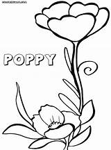 Poppy Coloring Pages Flower sketch template