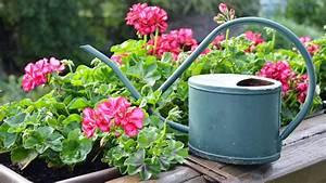 Blumen Für Schattigen Balkon : wie gut sind bew sserungssysteme f r pflanzen ratgeber garten ~ Orissabook.com Haus und Dekorationen