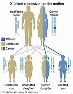 Primary Immune Deficiency Disease Genetics & Inheritance ...