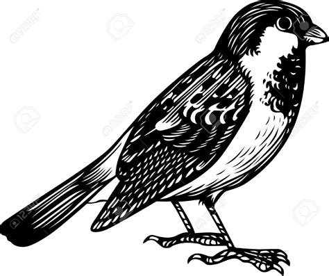 sparrow clipart black and white black clipart sparrow pencil and in color black clipart