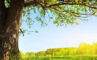 the tree wallpaper 1055076