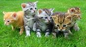 Adopt-A-Cat Month® - American Humane - American Humane