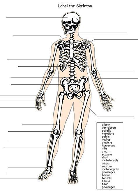 label  skeleton system skeletal system worksheet