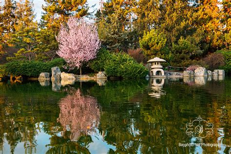 v a san jose japanese friendship garden wedding