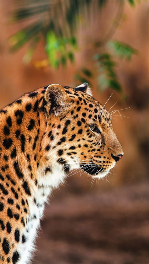 Animal Wallpaper For Iphone - leopard collection of animals wallpapers for