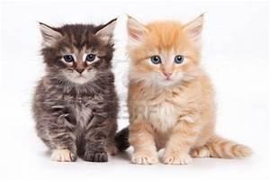 cute cat ! - Cats Picture