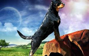 Rottweiler Wallpapers - Wallpaper Cave