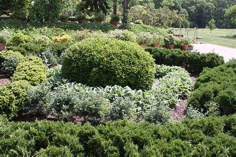 how to shape shrubs top 28 how to shape shrubs boxwood bundle vol1 silva3d how to prune topiary saga how to
