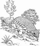 Coloring Ankylosaurus Hill Walking Down Pages Designlooter 1kb 686px Drawings sketch template