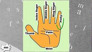 Finger Names: What are Fingers Called?