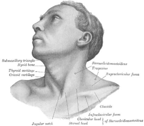 Adult-onset Idiopathic Torticollis - Physiopedia