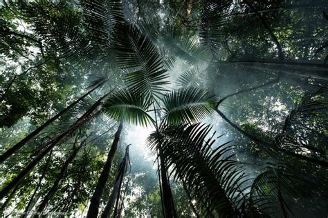 amazon deforestation rainforest usa solutions forest greenpeace forests brazil