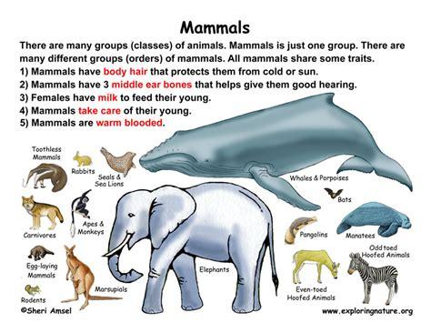 Class Mammals (Grade K 3)