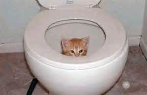 cat toilet word history of the week writing gooder