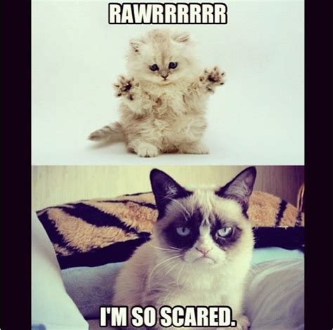 Scared Cat Meme - 346 best images about grumpy cat on pinterest grumpy cat humor grumpy cat valentines and