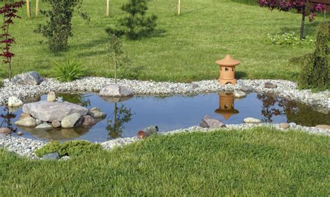 poisson pour bassin d exterieur am 233 nager un bassin d ornement dans votre jardin la pause jardin