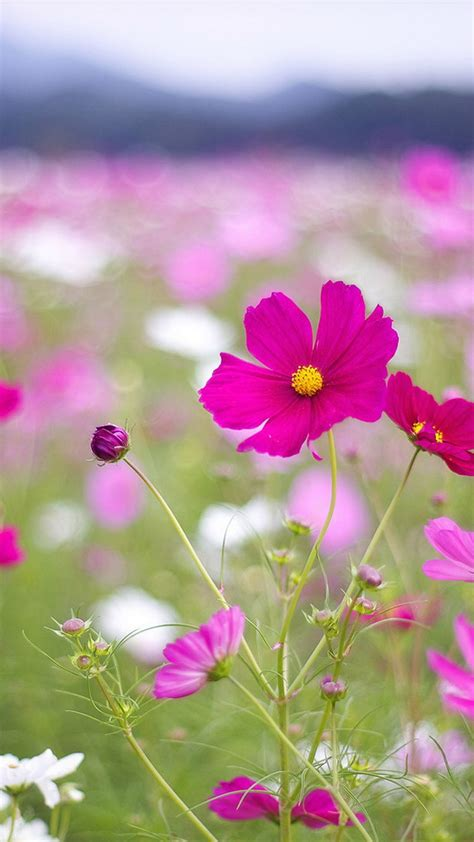 Animated Beautiful Flowers Wallpapers For Mobile - beautiful wallpapers for mobile phone 49 images