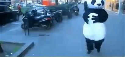 Falling Down Gifs Funny Panda