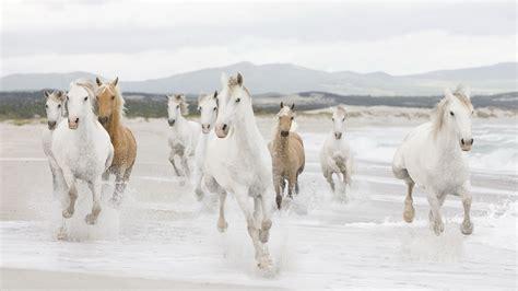 horse herd horses animals running desktop wild wallpapers animal resolution