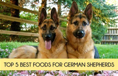 house plans free top 5 best foods for german shepherds