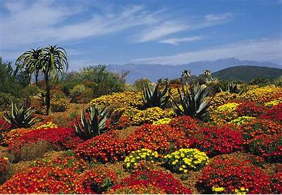 Cape Floral Region South Za African Source