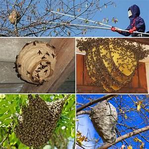 Nid De Guepe Dans Le Toit : nid de frelon guepe var with repulsif guepes toiture naturel ~ Medecine-chirurgie-esthetiques.com Avis de Voitures