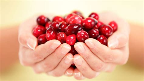 how to cranberries fresh cranberries buy fresh or dried cranberries direct