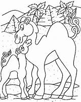 Camel Coloring Pages Animals Coloring2print sketch template