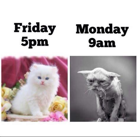 Friday Monday Meme - 661 best images about fridays and mondays ツ on pinterest happy monday mondays and monday humor