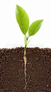 Growing Plant With Underground Root Visible