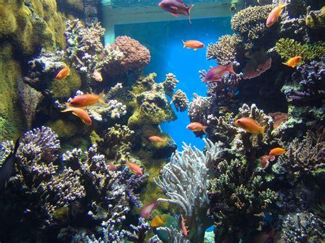aquarium cote d azur circuits cote d azur avec des enfants
