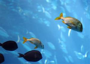 Fish | Free Stock Photo | Tropical fish swimming in the ...