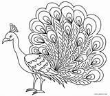 Peacock Coloring Printable sketch template